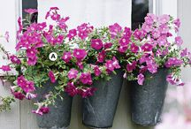 Container Gardening / Decorative  container and plant arrangements for small places. / by Samantha Chambers