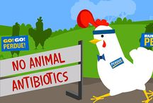 No Antibiotics Ever / When we say 'No Antibiotics Ever', we mean it.