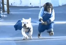 cats & dogs GIFs