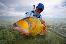 TRIGGERFISH / Triggerfish on the fly.  Fly fishing for triggerfish.
