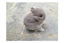 Rabbit ❤️❤️