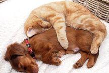 Doggies / I luv dogs!!!