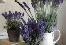 Lavender Flowers / Lavender is so soothing and can add a pop of color to your home. Use these inspirational ideas to add lavender to your home decor.