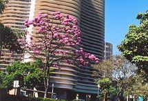 Belo Horizonte ♡♡♡ / Minha cidade!
