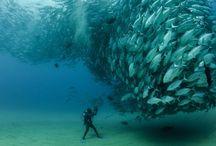 해저 바다 생물 물고기