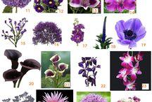 Plum purple flowers