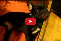 Cutey animal vidz!!! / Animal video clips that i think are soo cute