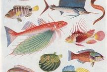 Antique Scientific Illustrations