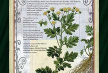 Natur-Heilkräuter / Gesundes aus der Natur