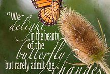 piękno i motyle