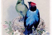 birds / by P Cruickshank-Schott