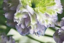 Gardens/Flowers / by Wendy Larson