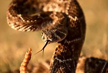 SNAKEPIT / by Endre Fabricius