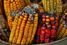 Food Biotechnology and GMO / Science-based articles about food biotechnology (GMO), its safety, environmental friendliness, potential to enhance the food supply, particularly in developing countries, and boost the nutritional profile of foods. / by Neva Cochran