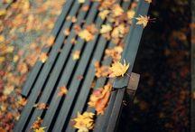 Banc/Bench - Chaise/Chair - Asseoir/Sit