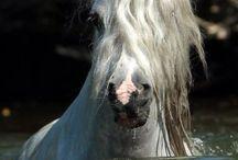 lovetohorses