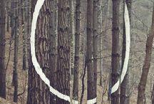 Bosque intervenido