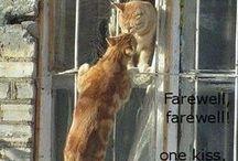 Mici e gatti