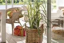 Interior Design: Indoor Planting / Not got much outdoor space? Plant to clean the air in your home!