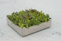 Rooftop Gardening / by Susan Day