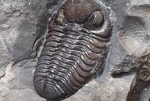Fossili / raccolta di fotografia di fossili da tutto il mondo