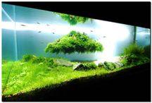 Aquarium_Terrarium
