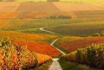 Countryside in Hungary <3
