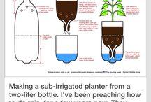 DIY Seedlings
