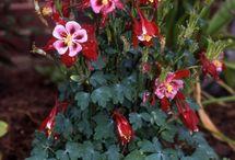 сад идеи цветы