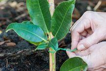 rhododendron züchten