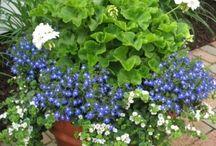 Summer flower ideas