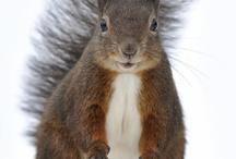 coquin...l'écureuil