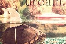 상어 거북