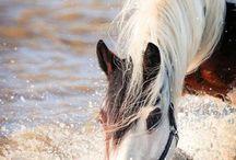 Horse Photography / by Skylawage