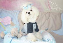 Our Mascot Shu Shu / Last Night White Star of Eternity