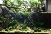 kolam aquarium