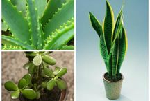 Safe plants