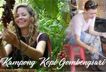 Kampong Kopi Gombengsari, Wisata Kebun Kopi Banyuwangi