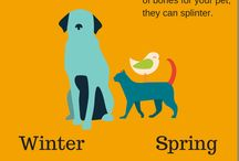 Fall With Your Pets / The fall season with your pets. Images and activities surrounding the season.