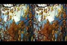 3D Stereoscopic Nature Videos / 3D Stereoscopic Nature videos, they can be viewed with anaglyph glasses, 3D TV's or 3D phones via YT3D  (YouTube 3D) / by William Turner