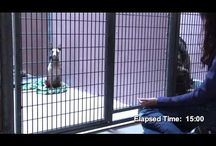 Animal Reiki Videos
