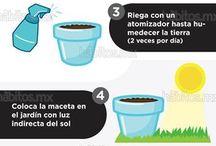 cultivo plantas