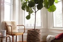 plants interieur / by miri pedersen