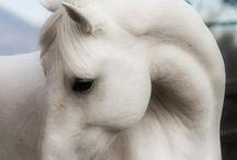 All things Equestrian / by Burtee !