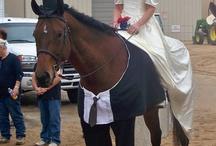 Horses - Costumes