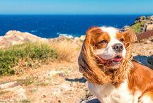 Frankreich mit Hund / Urlaub oder Geschäftsreisen nach Frankreich mit Hund