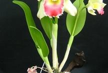 орхидеи с полимерной глины