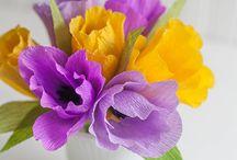01 tulipán