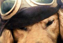 Dog photograph ideas