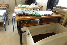 Τμήμα Φυτικής Παραγωγής ΕΠΑΛ Δοξάτου Δράμας 2015-2016